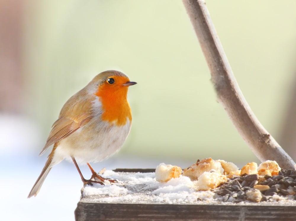 Flot fugl på foderbræt